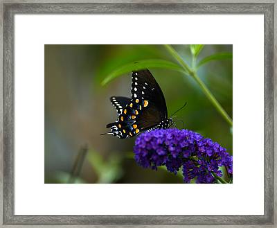 Butterfly Atttaction Framed Print