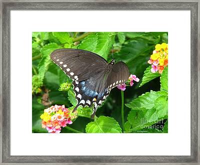 Butterfly Ballot Framed Print