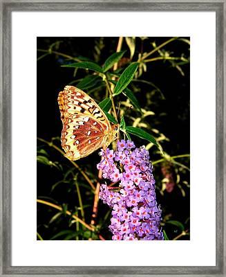Butterfly Banquet 2 Framed Print