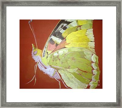 Butterfly Basic In Work Framed Print