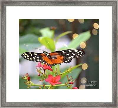 Butterfly Beauty Framed Print by Carla Carson