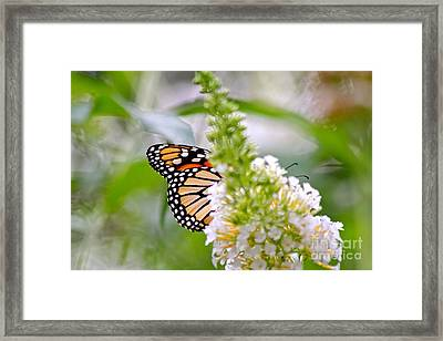 Framed Print featuring the photograph Butterfly Behind Bush by Jay Nodianos