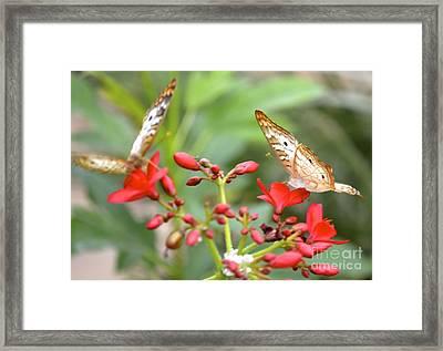 Butterfly Besties Framed Print by Carla Carson