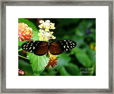 Butterfly Framed Print by Bev Conover