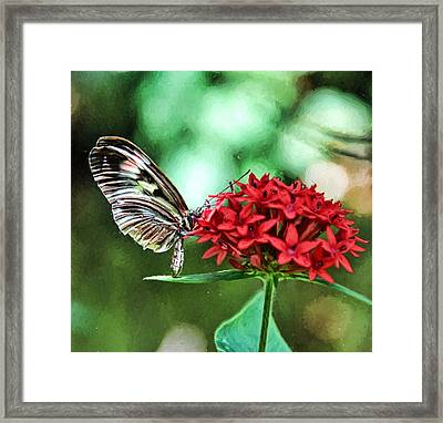 Framed Print featuring the photograph Butterfly by Bill Howard