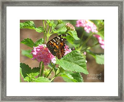Butterfly Bloom Framed Print by Gayle Melges