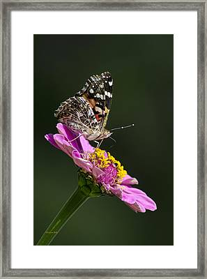 Butterfly Blossom Framed Print by Christina Rollo