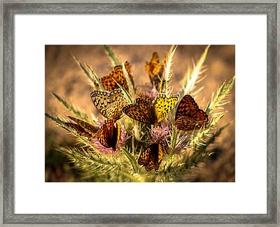 Butterfly Bouquet Framed Print