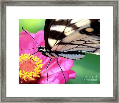 Butterfly Brunch Framed Print