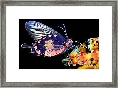 Butterfly Brushed In Water And Wind Framed Print by Wernher Krutein