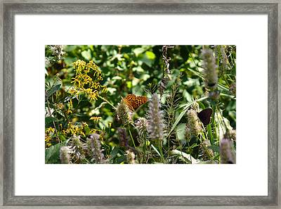 Butterfly Buffet Framed Print