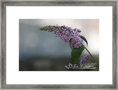 Framed Print featuring the photograph Butterfly Bush 20120706_165a by Tina Hopkins