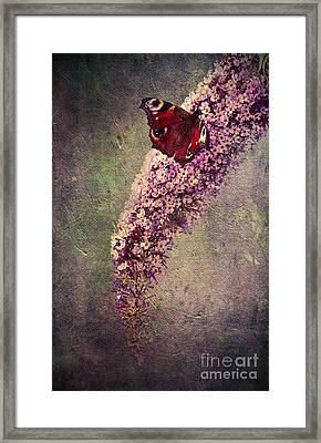 Butterfly Bush Framed Print by Svetlana Sewell