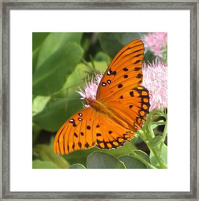Butterfly Butterfly 2  Framed Print by Cathy Lindsey