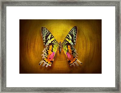 Butterfly - Butterfly Of Happiness  Framed Print