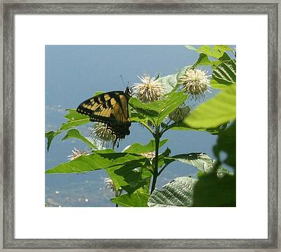 Butterfly By The Water Framed Print by Stephen Melcher