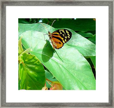 Framed Print featuring the photograph Butterfly Chasing Shadow by Janette Boyd