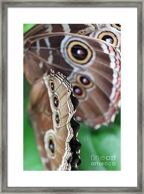 Butterfly Close Up  Framed Print by AR Annahita