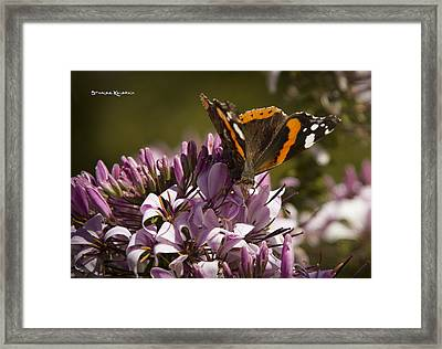 Framed Print featuring the photograph Butterfly Close Up by Stwayne Keubrick