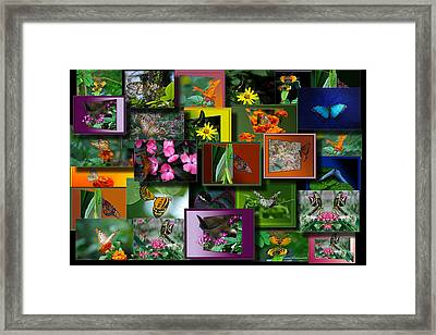 Butterfly Collage Rectangle Framed Print by Thomas Woolworth