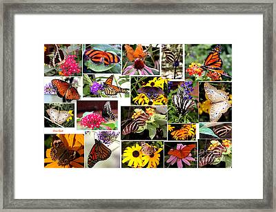 Framed Print featuring the photograph Butterfly Collage by Steven Spak