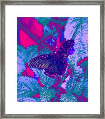 Butterfly  Framed Print by David Mckinney