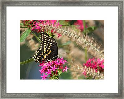 Butterfly Days Framed Print by Suzanne Gaff