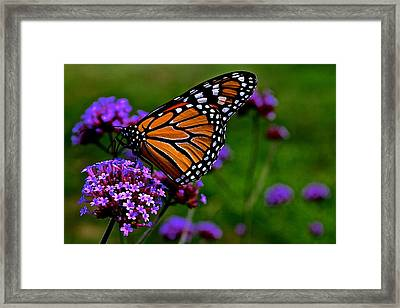 Butterfly Journey Framed Print