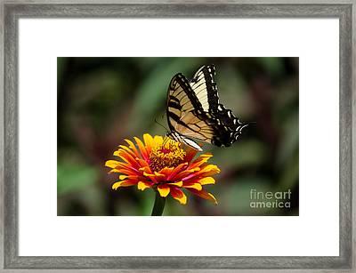 Butterfly Delight Framed Print by Nancy Edwards