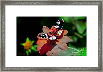Butterfly Dont Fly Away Framed Print