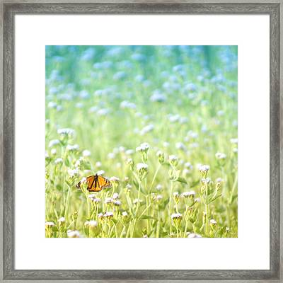 Butterfly Dreams Framed Print by Holly Kempe