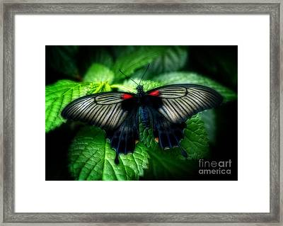 Butterfly Dreams Framed Print by Inspired Nature Photography Fine Art Photography