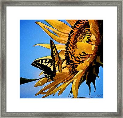 Butterfly Effect Framed Print by Cole Black