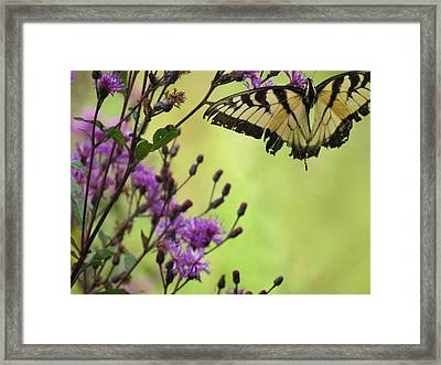 Framed Print featuring the photograph Butterfly by Eric Switzer