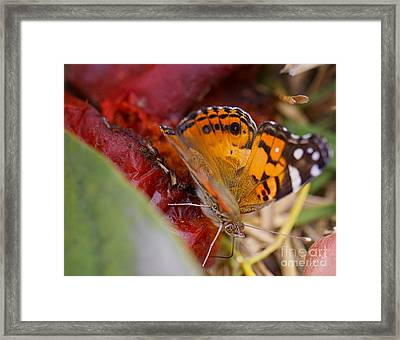 Framed Print featuring the photograph Butterfly by Erika Weber