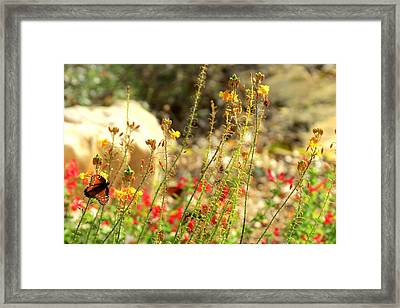 Framed Print featuring the photograph Butterfly Feeding by David  Norman