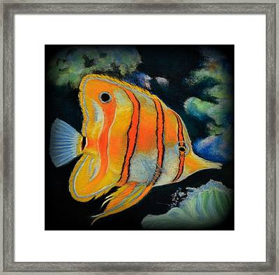 Butterfly Fish Framed Print by Antonia Citrino