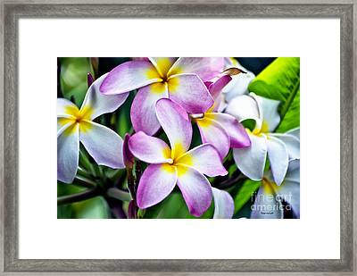 Framed Print featuring the photograph Butterfly Flowers by Thomas Woolworth