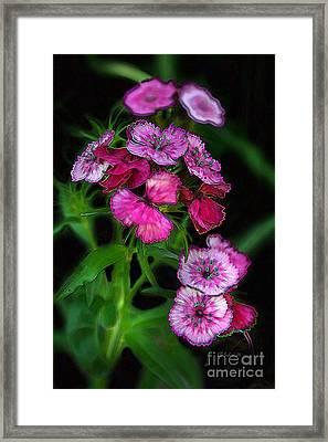 Framed Print featuring the digital art Butterfly Garden 02 - Carnations by E B Schmidt