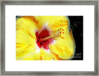 Framed Print featuring the digital art Butterfly Garden 07 - Hibiscus by E B Schmidt