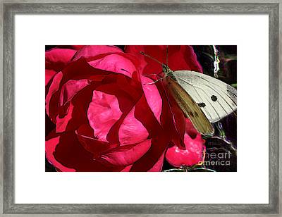 Framed Print featuring the digital art Butterfly Garden 21 - Cabbage White by E B Schmidt
