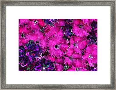 Framed Print featuring the digital art Butterfly Garden 23 - Carnations by E B Schmidt