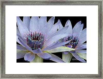 Framed Print featuring the digital art Butterfly Garden 26 - Water Lilies by E B Schmidt