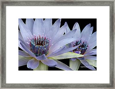 Butterfly Garden 26 - Water Lilies Framed Print