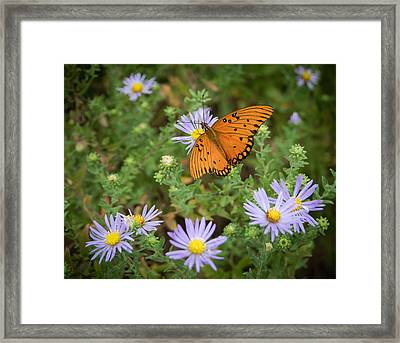Butterfly Garden Framed Print by James Barber
