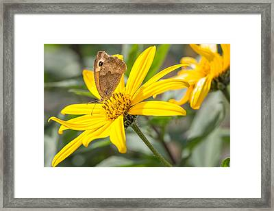 Framed Print featuring the photograph Butterfly. by Gary Gillette