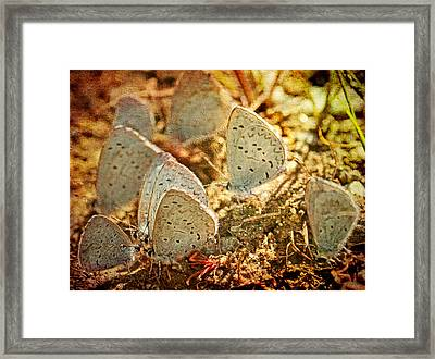Framed Print featuring the photograph Butterfly Gathering by Peggy Collins