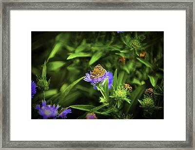 Butterfly Glow Framed Print