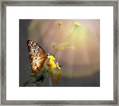 Butterfly Glow Framed Print by Judy Vincent
