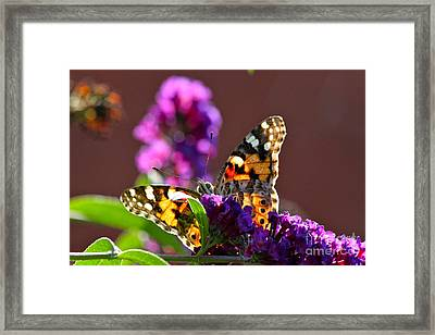 Butterfly Hiding Framed Print by Jay Nodianos